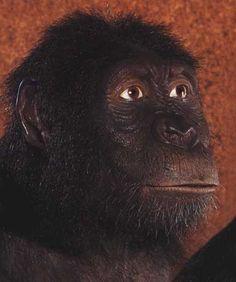 Filosofia. PaleoAntropología. Australopithecus Anamensis.