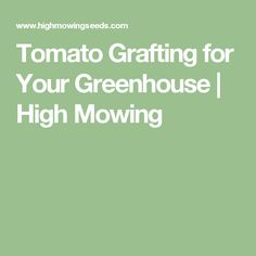 Tomato Grafting for Your Greenhouse   High Mowing