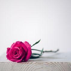 Rose Flower Photos, Love Rose Flower, Beautiful Rose Flowers, Flower Images, Blossom Flower, Flowers Nature, Flower Pictures, Flower Frame, Rose Flower Wallpaper