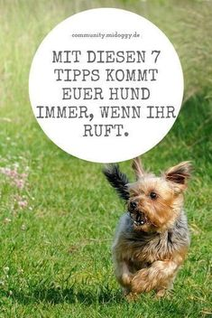 7 common mistakes when recalling - and how to avoid them - Hundeerziehung u. Animals And Pets, Funny Animals, Cute Animals, Pet Puppy, Dog Cat, Yorky, Dog Hacks, Old Dogs, Puppy Pictures