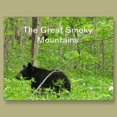 Smoky Bear Postcards