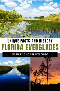 Discover the Florida Everglades: Facts, Fun and Fascinating History Florida Hotels, Naples Florida, Florida Vacation, Florida Beaches, Florida Everglades, Everglades National Park, Fort Myers Attractions, Naples Sunset, Florida Travel Guide