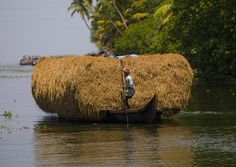 Man Pulling His Heavily Loaded Bark With Hays Using A Wooden Stick On The Backwaters Of Kerala, Alleppey, India