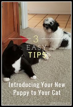 Here are 3 tips for introducing a new puppy to your cat. http://www.ohmyshihtzu.com/introducing-new-puppy-established-pack/?utm_campaign=coschedule&utm_source=pinterest&utm_medium=Oh%20My%20Shih%20Tzu&utm_content=Introducing%20a%20New%20Puppy%20to%20an%20Established%20Pack