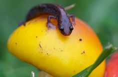Amphibian and Reptile Photography - Google+