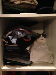 Closeted Cat