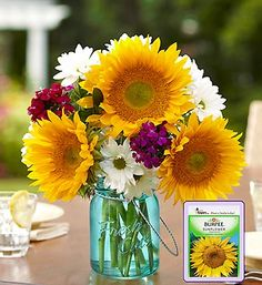 Bring a little extra cheer to birthdays, anniversaries, or any occasion with our Sunflower Medley.  Part of the Sunflower Spectacular, this sunflower arrangement comes with a free blue mason jar vase and a free package of sunflower seeds for just $27.99!