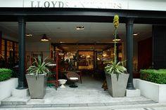 Lloyd's Antiques Aoyama - 3-1-30 Jingūmae, Shibuya-ku, Tōkyō / 東京都渋谷区神宮前3-1-30
