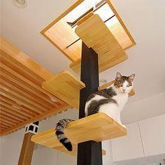 ♥ Cool Cat Towers ♥ 猫が快適に暮らせる家を一級建築士がデザインするとこうなる! | マイナビニュース