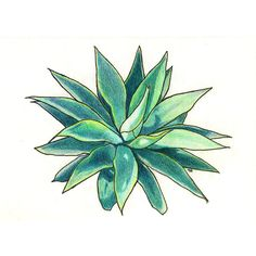 Green Succulent Colored Pencil Drawing Original (440 HRK) ❤ liked on Polyvore featuring home, home decor, wall art, filler, framed wall art, succulent wall art, green wall art and green home decor