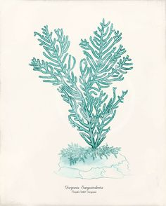Antique Coral Art Print  8x10  Gorgonia Teal by 1001treasures, $12.00