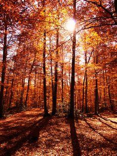Montseny en otoño