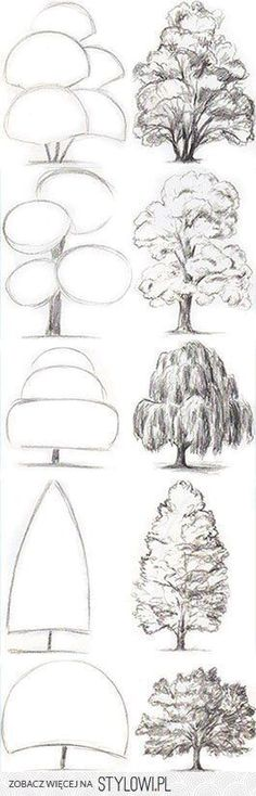 Drawing Tips Tree Drawing Tutorial. Start with basic geometric shapes. Tree Sketches, Drawing Sketches, Pencil Drawings, Easy Sketches, Tree Pencil Sketch, Plant Sketches, Pencil Trees, Pencil Shading, Drawing Designs