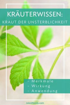 Jiaogulan wird auch Kraut der Unsterblichkeit genannt, was dahinter steckt, welc… Jiaogulan is also called herb of immortality, what is behind it, what effects and applications are possible with this great herb you will find out here. # Knowledge of herbs Diy Herb Garden, Veg Garden, Garden Organization, Natural Lifestyle, Healing Herbs, Superfood, Roots, Detox, Herbalism