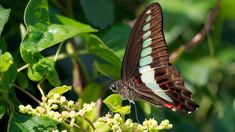 This butterfly has extreme color vision | Science | AAAS
