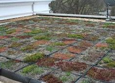 Image result for simple green roof design