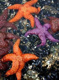 beautiful star fish