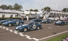 All 6 Shelby Cobra Daytona Coupe together @ Goodwood 2015 Shelby Daytona, Shelby Car, Fast Sports Cars, Sport Cars, Replica Cars, Goodwood Festival Of Speed, Goodwood Revival, Ford Gt40, Wallpaper Magazine