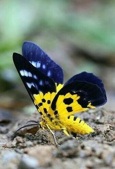 LOVELY BLUE AND YELLO BUTTERFLY