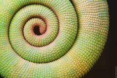 geometrie naturali - Perfect-Geometric-Patterns-In-Nature13__880