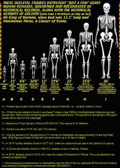 """The chart above documents some of the more well known discoveries of """"giants"""" in our recent history. Some researchers have speculated that giants were quite common as a species in Earth's distant past. One Giant skeleton was reportedly a towering 36 ft. Aliens And Ufos, Ancient Aliens, Ancient History, Les Annunaki, Nephilim Giants, Giant People, Tall People, Giant Skeleton, Ancient Discoveries"""
