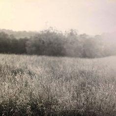 Northern Virginia submitted by @michaelbarolet #kodak_photo #4x5 #largeformat #largeformatphotography #film #filmisnotdead #filmphotographic #kodak #kodaktmax #tmax100 #ilford #ilfordwarmtone #landscape #darkroom #instagood #photooftheday #picoftheday #silvergelatinprint