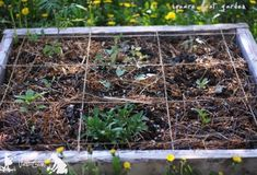 Using A Square Foot Gardening Layout Lettuce Seeds, Bush Beans, Peat Moss, Square Foot Gardening, Farm Yard, Companion Planting, Seed Starting, Raised Garden Beds, Organic Gardening
