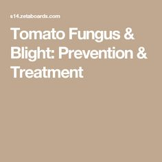 Tomato Fungus & Blight: Prevention & Treatment