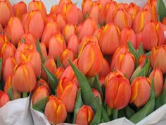 Tulips - General: Perfect Lover, Frame, Emblem of Holland. - Red: Believe Me, Declaration of Love. - Yellow: There's Sunshine in Your Smile. - Variegated: Beautiful Eyes