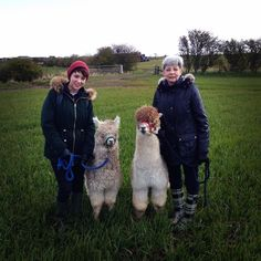 Sheila and Philippa walked with our new babies today #alpaca #northumberland #hectorandrowley #glampingnorthumberland #glamping #visitnorthumberland #visitbritain