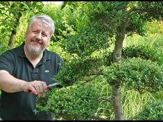 Decoration Plante, Plantation, Horticulture, Bonsai, Garden Design, Japanese, Nature, Outdoor, Gardening