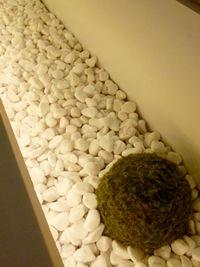 千里中央の家 マンションのデザインリフォーム インテリアグリーン
