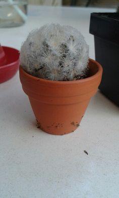 Cactus casa
