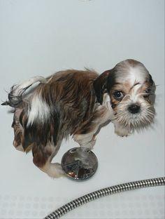 Doggie Sam