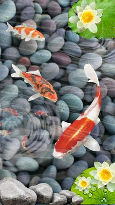 Koi fish brings luck to your life. Do you believe in myths and believes? Try this out for yourself, get a Koi fish for your phone screen. 3d Wallpaper, Live Wallpapers, Pastels, Cool Style, Beautiful Pictures, Fish, Phone, Flowers, Anime