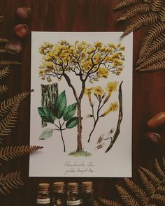Tree Illustration, Ink Illustrations, Botanical Illustration, Watercolor And Ink, Trumpet, My Photos, Vintage Fashion, Artwork, Prints