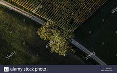 Dieses Stockfoto: Tree Tops aus der Luft - 2A1RA31 aus der Alamy-Bibliothek mit Millionen von Stockfotos, Illustrationen und Vektorgrafiken in hoher Auflösung herunterladen. Tree Tops, Illustration, City Photo, Landscape, Illustrations