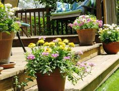Plantas perennes para jardineras y macetas.                                                                                                                                                                                 Más