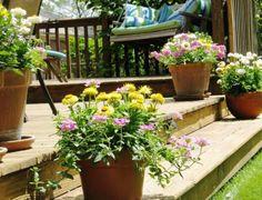 Plantas perennes para jardineras y macetas.