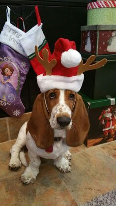 Christmas Basset Hound Dog