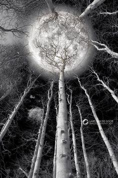 En el majestuoso conjunto de la creacion, nada hay que me conmueva tan hondamente, que acaricie mi espíritu y dé vuelo a mi fantasía como la luz apacible y desmayada de la luna.