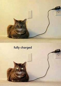 Charges quicker than my phone, sits around for as much time as my phone does, eats as much money as my phone does.... How come my phones battery doesn't last as long on one charge as the damn cat does....