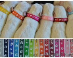 Paw Print Whelping Puppy ID Collars                                                                                                                                                                                 More