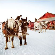 Take a sleigh ride in Steamboat Springs to see a winter wonderland of snow