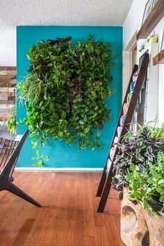 Wow! This indoor plant wall is stunning. The turquoise makes it even better.