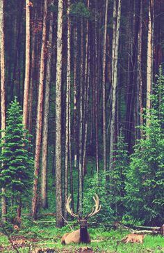 woods, forest, deer, photography