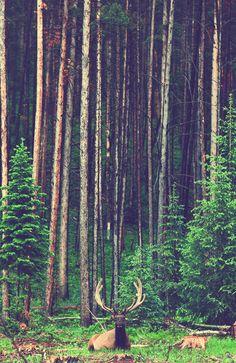 Natur, wie sicher und groß erscheinst du in allem!  (Goethe)