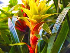 Beautiful Hawaiian Flower. Aloha!