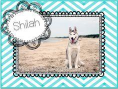 Shilah the 2nd Grade Mascot