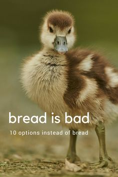 NEVER feed ducks bread! It's bad for them and bad for the environment. Here are 10 things you can feed them instead. #duck #animal